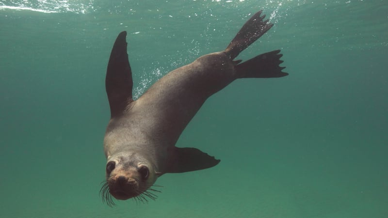 Swim With Dolphins & Seals - Mornington Peninsula - For 2