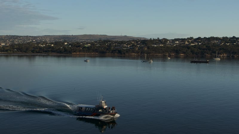 Sea Lion Watching Cruise, Half Day - Port Lincoln, SA