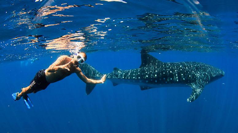 Off Season Whale Shark Swim & Whale Watching Tour - Exmouth