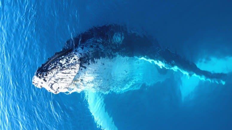 Off-Season Whale Shark Swim & Ningaloo Reef Wildlife Cruise - Exmouth