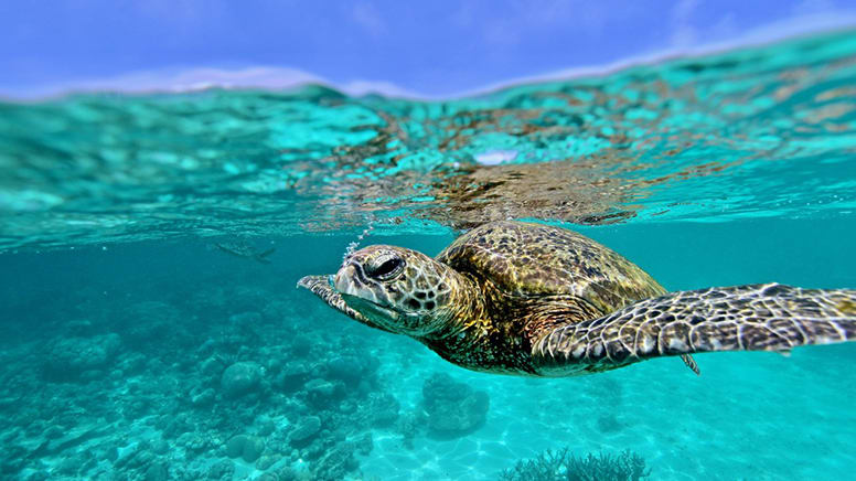 Quad Biking & Turtle Spotting Adventure, 2 Hours - Coral Bay