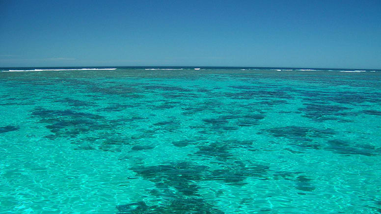 Ningaloo Reef Manta Ray Snorkel Tour, Full Day - Coral Bay