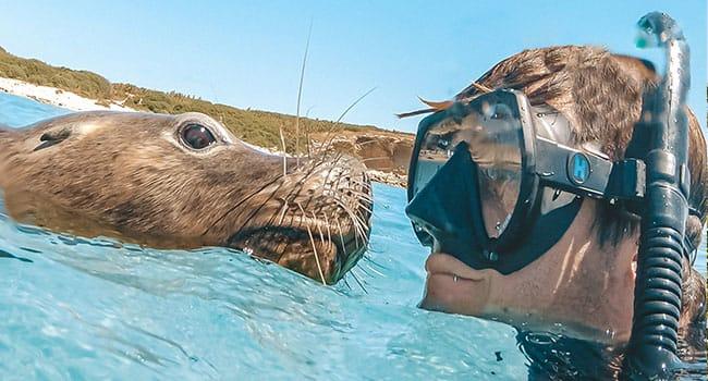 Swim with sea lions, Port Lincoln