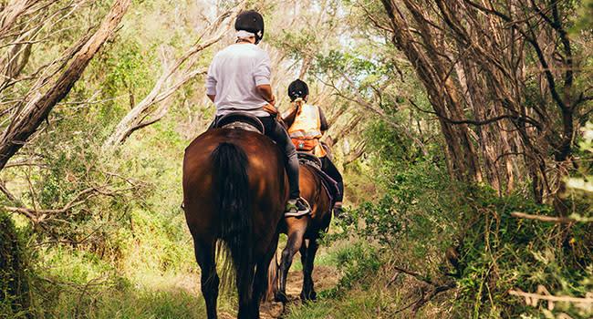 Under $200 - Horse trail ride, Mornington Peninsula