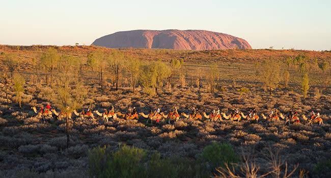 Under $200 - Uluru camel tour, Alice Springs