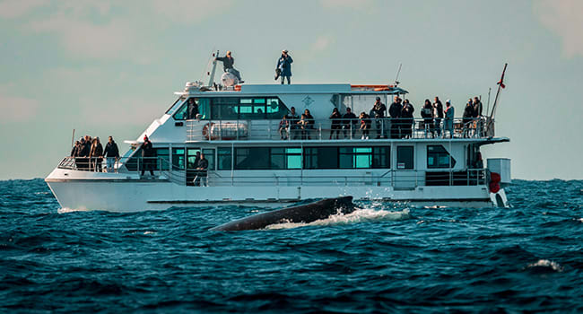 Whale watching, Darling Harbour