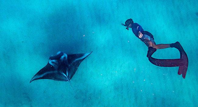 Swimming with manta rays, Ningaloo Reef