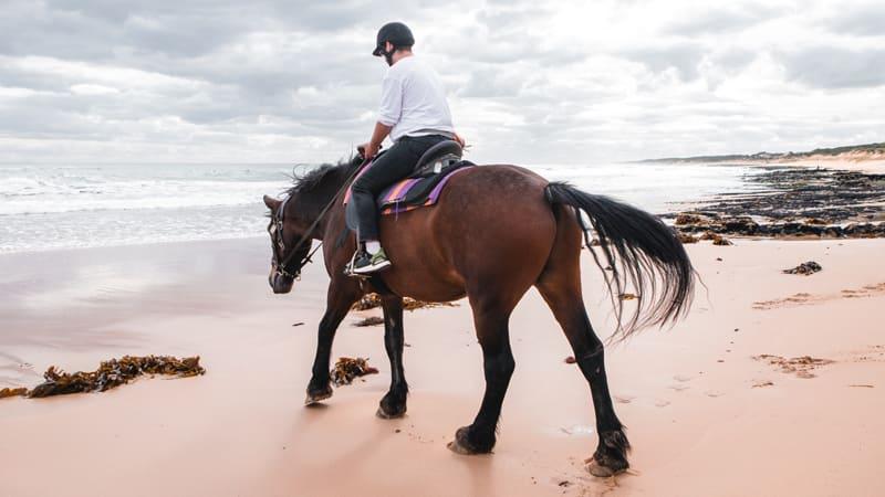 Beach Horse Ride & Brewery Lunch - Mornington Peninsula - For 2