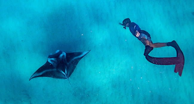 Day 3: Swim with the manta rays