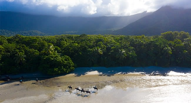 Day 2: horse trail ride of Daintree's Cape Tribulation