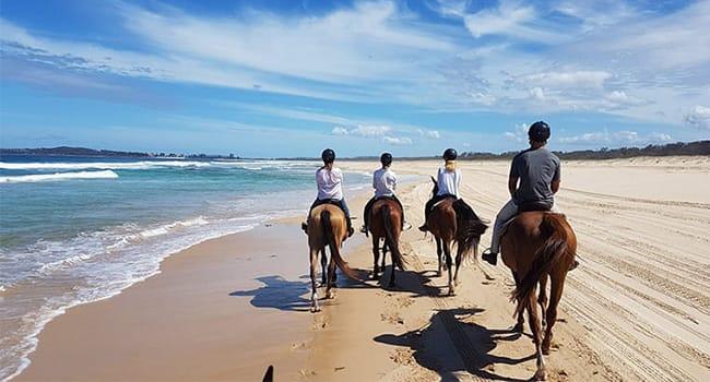 Beach & bush horse trail ride, Forster