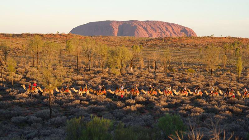 Sunrise Camel Ride,1 Hour - Uluru & Kata-Tjuta