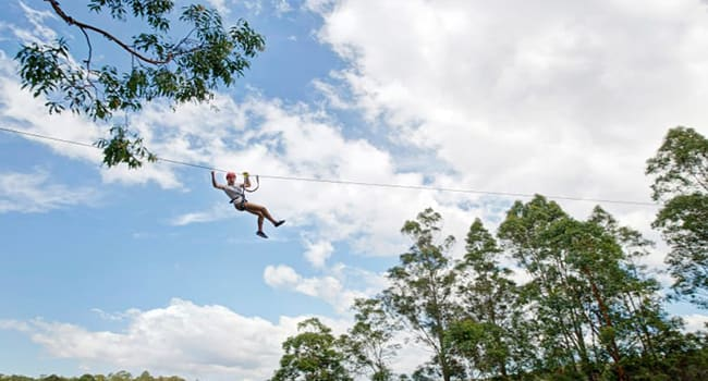 Treetop zipline adventure, Southern Highlands