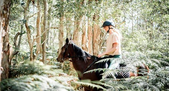 Under $100 - Horse riding, Byron Bay