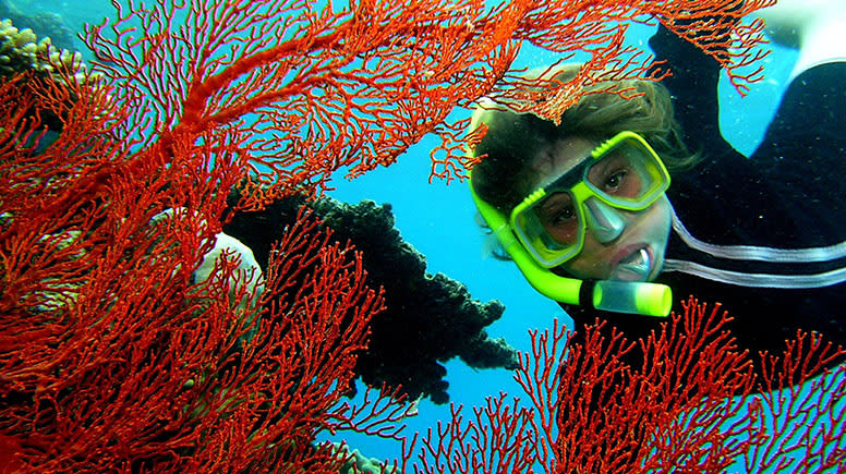 Great Barrier Reef Cruise with Snorkelling, Full Day - Cairns