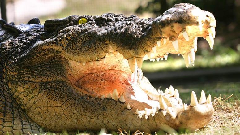 Hartley's Crocodile Adventure & Transfers, Half Day - Cairns