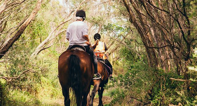Horse trail ride, Mornington Peninsula