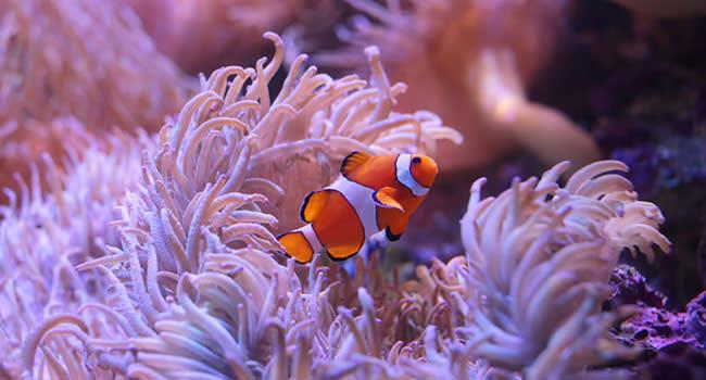 SEA LIFE aquarium entry, Sydney