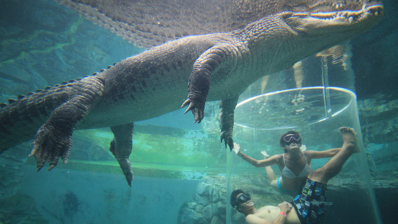 Swim With Crocodiles in the Cage Of Death & Cove Entry - Darwin - For 2