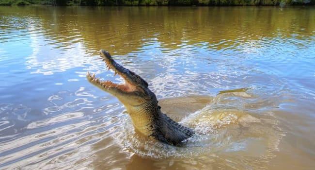 Jumping Crocs Cruise Tour, Darwin