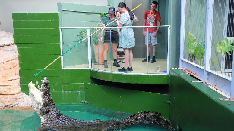 Crocodile Feeding & Reptile Tour at Crocosaurus Cove - Darwin