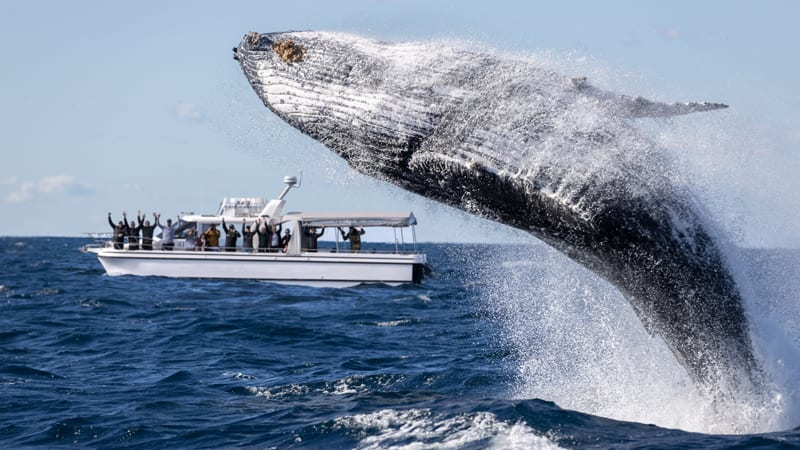 Whale Watching Cruise, 2.5 Hours - Departs Manly Wharf