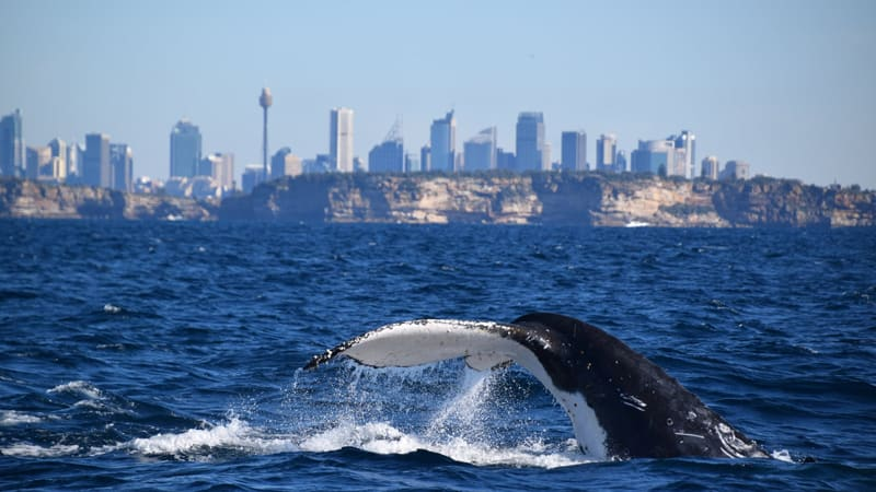 Extreme Whale Watching Safari, Whale Sighting Guarantee - Manly