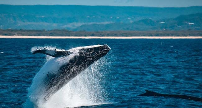 Whale Watching Tour, Mooloolaba