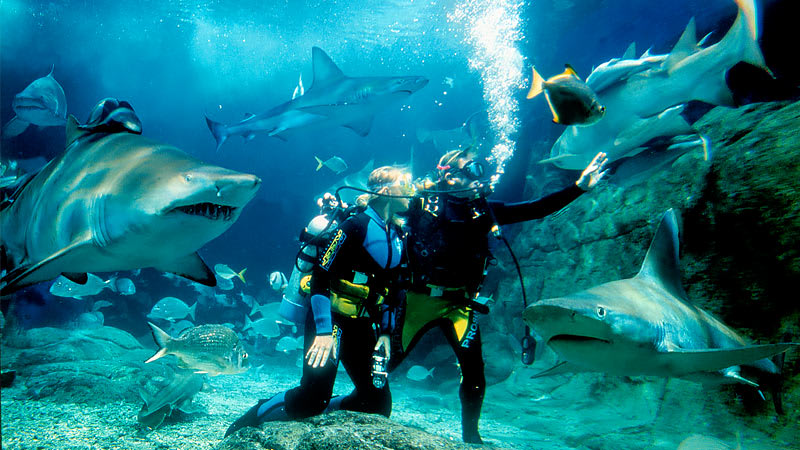 Dive With Sharks, Melbourne SEA LIFE