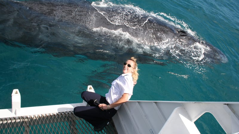 Whale Watching Cruise, 4.5 Hours - Brisbane