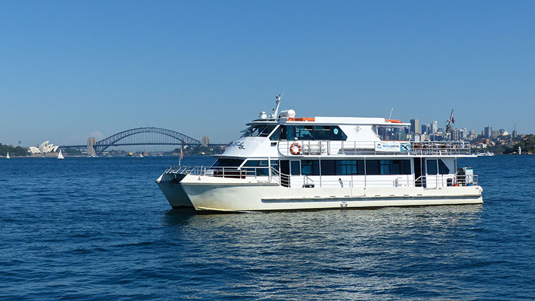 Whale Watching Cruise, 4 Hours - Sydney