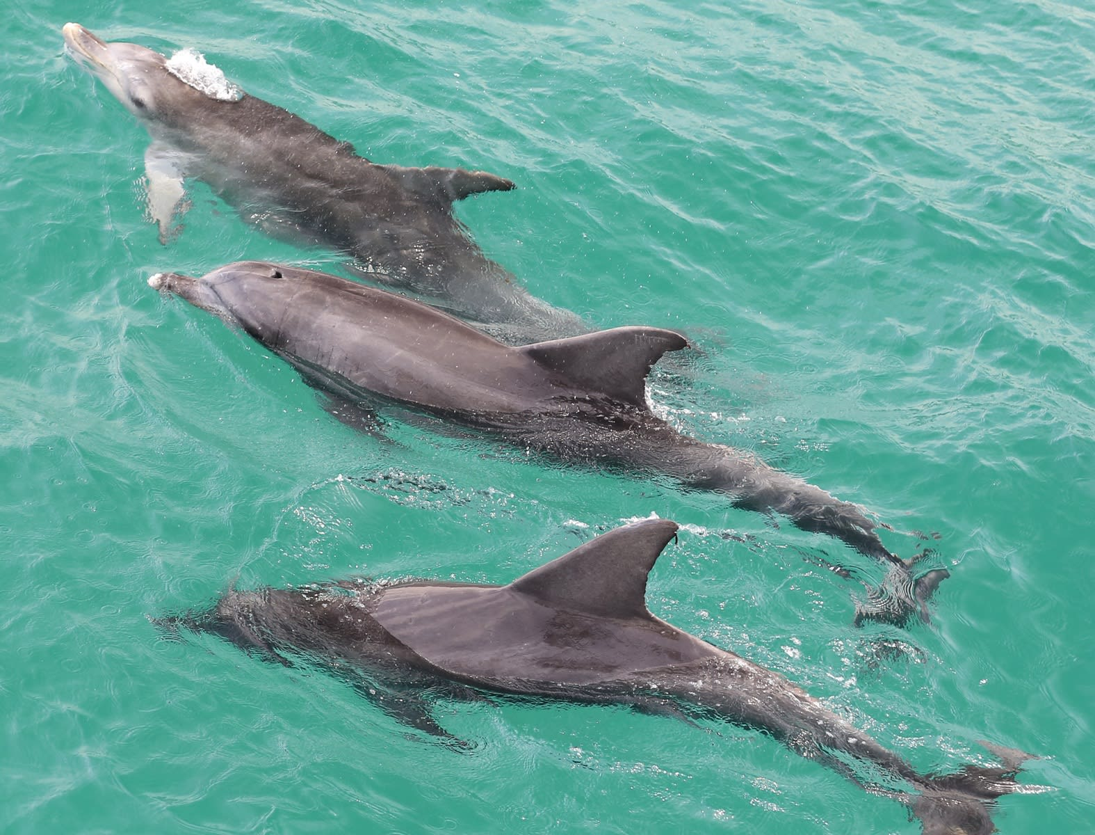 Dolphin Watching Cruise, 90 Minutes - Jervis Bay