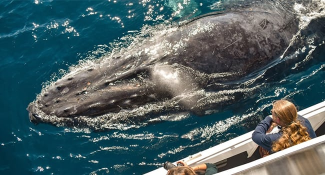 Whale Watching Tour, Sunshine Coast