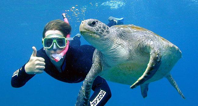Sea turtle snorkel tour, Byron Bay