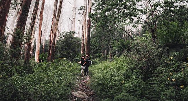Dandenong Ranges Tourist Track, Dandenong Valley