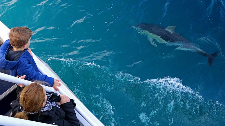 Whale Watching Cruise, 4 Hours - Phillip Island