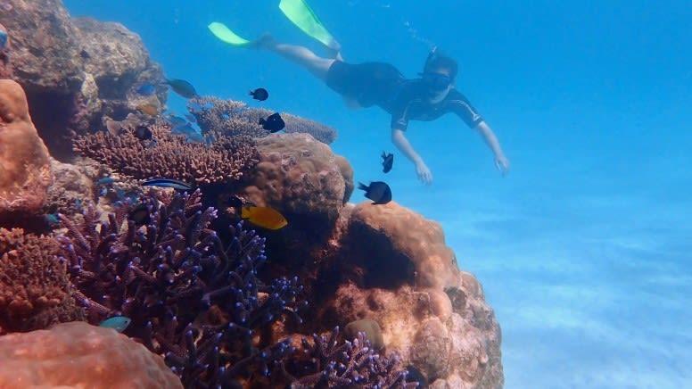 Ningaloo Reef Kayak & Snorkel Tour, Full Day  - Exmouth