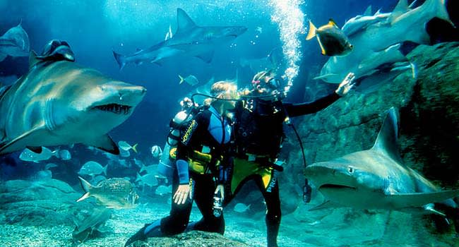 Dive with sharks at SEA LIFE