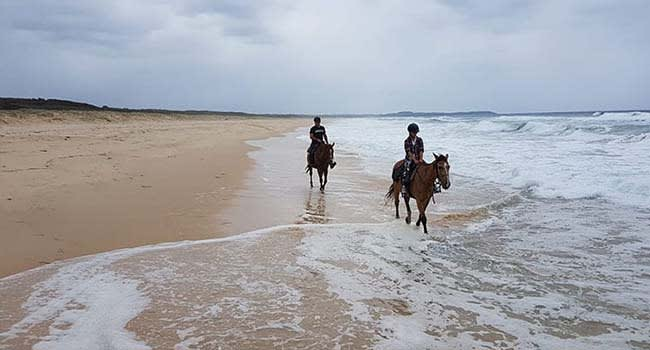 Beach and bush horse ride, Forster