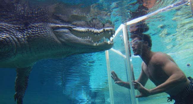 Dive with crocodiles, Darwin