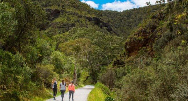 Morialta Wilderness and Wildlife Hike Tour