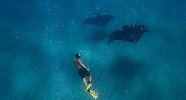 @Dylan.Dehaas- Swim with Manta Rays, Ningaloo Reef