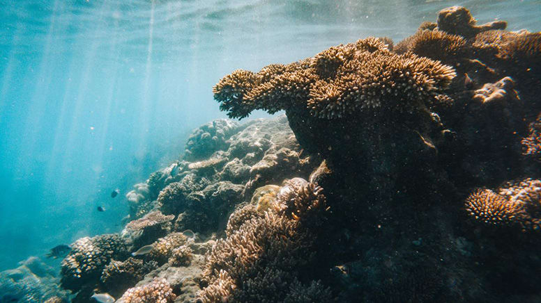 Great Barrier Reef Cruise with Snorkelling, Full Day - Mackay