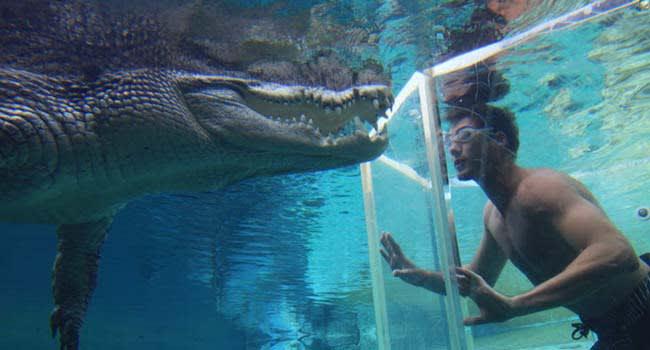 Darwin: Swim With Crocodiles