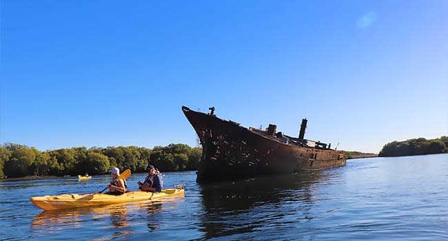Adelaide: Dolphin Sanctuary & Ship Wreck Kayak