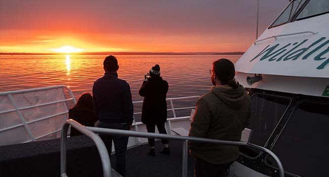 Phillip Island: Twilight Bay Cruise
