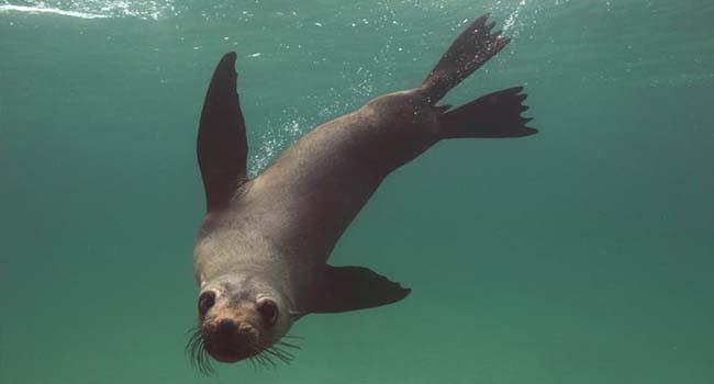 Mornington Peninsula: Swim With Dolphins & Seals