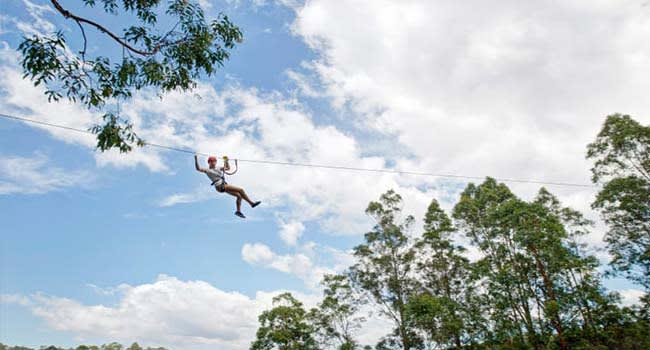 Coffs Harbour: High Ropes Climbing Course