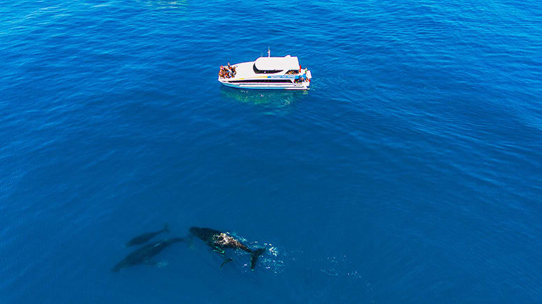 Whale Watching Cruise, 2 Hours - Fremantle