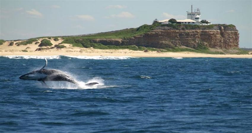Whale Watching Cruise - 3 Hours